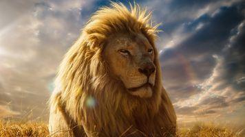 Заставки Король лев,Мустафа,постер,правитель Земель Прайда,муж Сараби,брат Шрама,отец Симбы