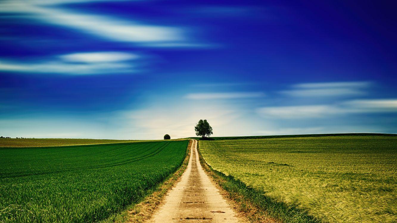 Фото бесплатно поле, дорога, дерево, трава, горизонт, небо, пейзаж, пейзажи