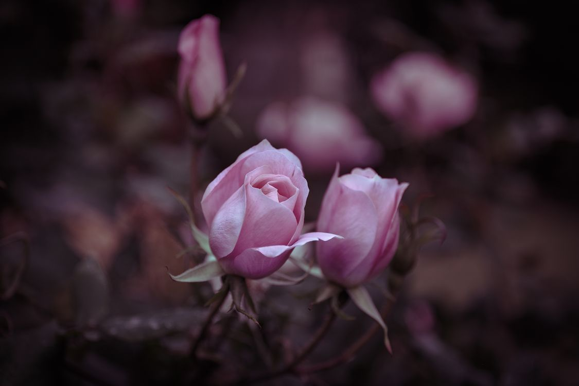 Цветы под зиму · бесплатное фото