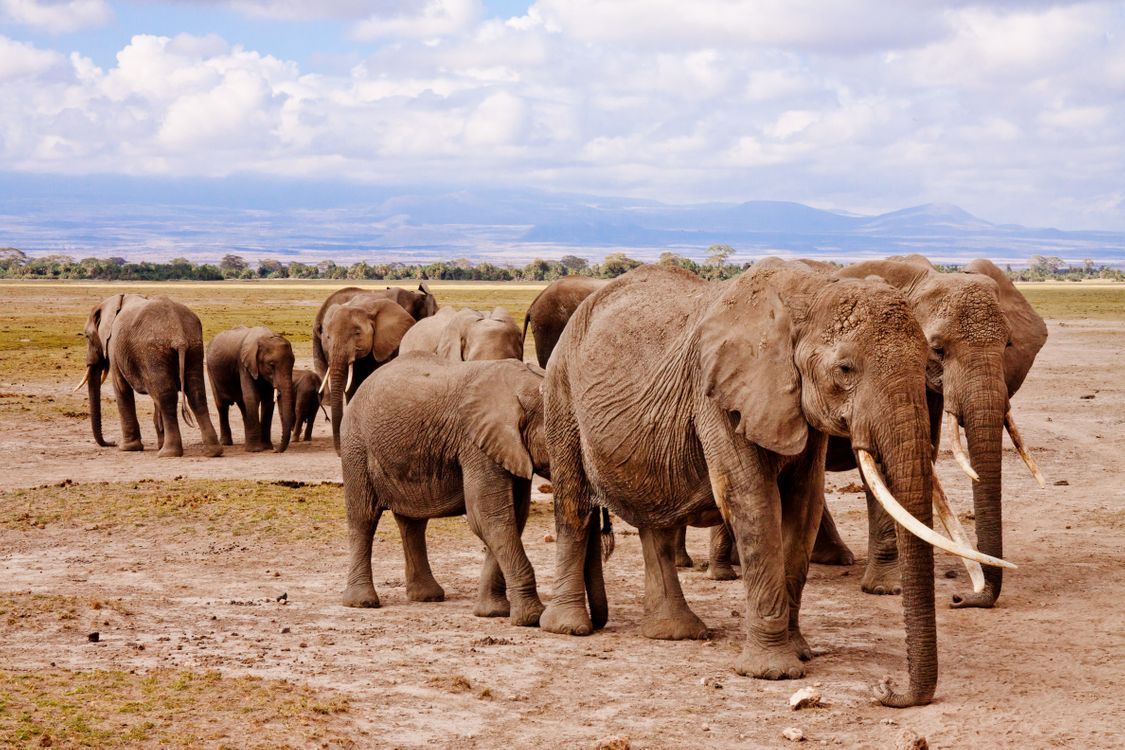 Фото приключение животное дикая природа - бесплатные картинки на Fonwall