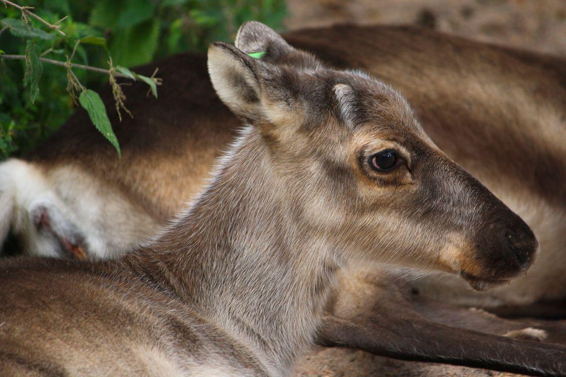 Фото природа животное дикая природа - бесплатные картинки на Fonwall