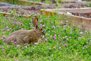 Фото бесплатно кролик, вид в профиль, трава