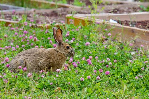 Photo free Bunny, view profile, grass