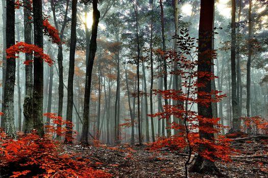 Фото бесплатно красный, туман, осень