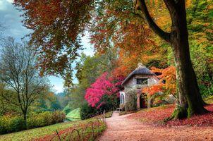 Фото бесплатно осень, сад, коттедж, листья, деревья, кусты, розовый, зеленый, оранжевый, тропа, мох, природа, пейзаж, проселочная дорога