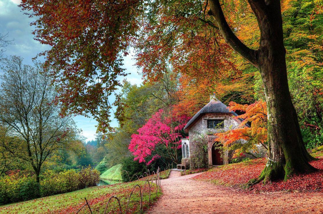 Обои осень, сад, коттедж, листья, деревья, кусты, розовый, зеленый, оранжевый, тропа, мох, природа, пейзаж, проселочная дорога на телефон | картинки природа - скачать
