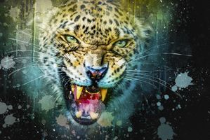 Заставки Гринь, искусство, леопард