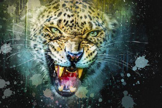 Заставки леопард, хищник, оскал