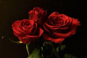 Фото бесплатно роза, букет, чёрный фон