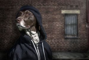 Фото бесплатно собака, одежда, морда