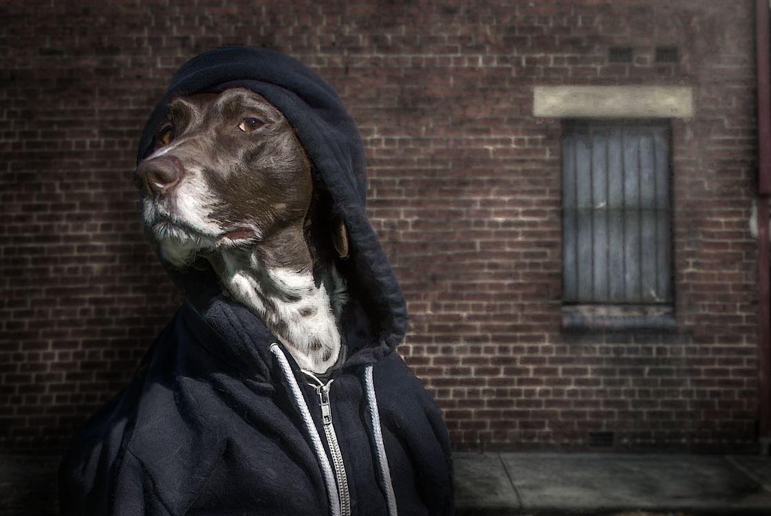 Фото бесплатно собака, одежда, морда - на рабочий стол