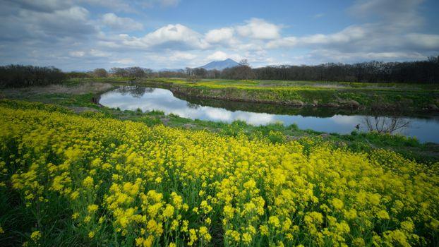 Фото бесплатно желтые цветы, река, облака