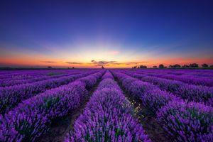 Фото бесплатно лаванда, цветы, пейзаж
