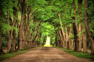 Фото бесплатно красивый, зеленый, пейзаж, природа, дорога, деревья, парк, старые деревья