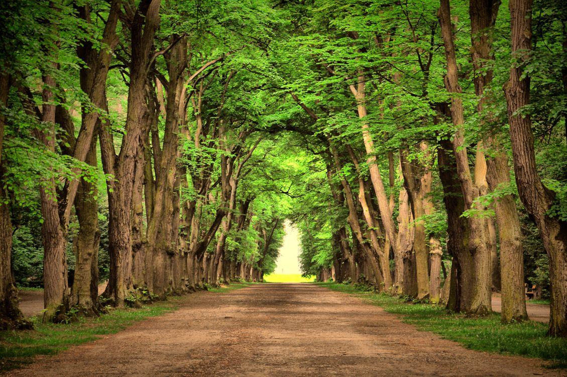 Фото бесплатно красивый, зеленый, пейзаж, природа, дорога, деревья, парк, старые деревья, природа - скачать на рабочий стол