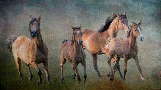 Photo free horses, photoshop, art
