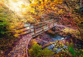Бесплатные фото осень,лес,деревья,река,речка,ручей,мост