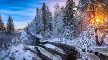 Фото бесплатно река, солнце, лес
