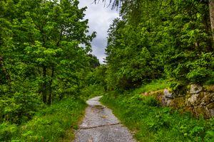 Заставки лес, Австрия, дорога
