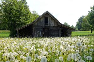 Фото бесплатно сарай, блум, цветение