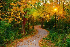 Заставки осень, парк, лес, дорога, деревья, пейзаж