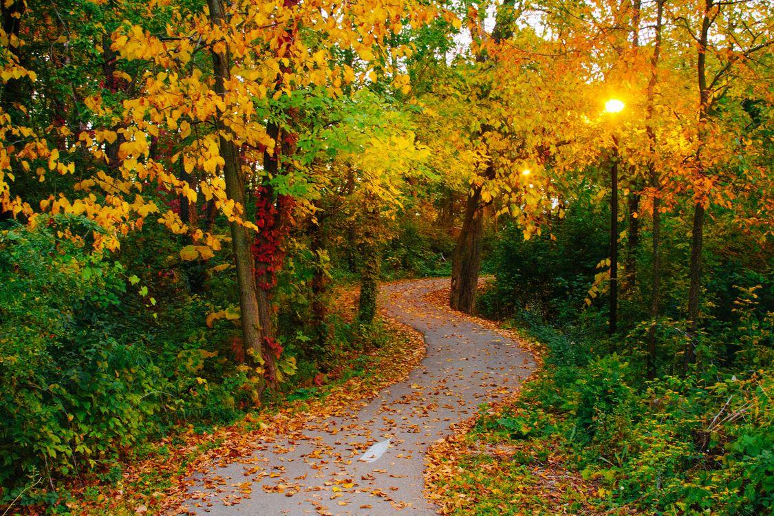 Фото бесплатно осень, парк, лес, дорога, деревья, пейзаж, пейзажи
