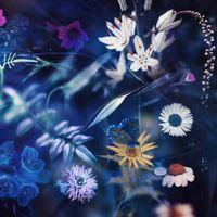 Фото бесплатно природа, бабочка, поля