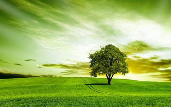 Заставки зеленый, природа, небо