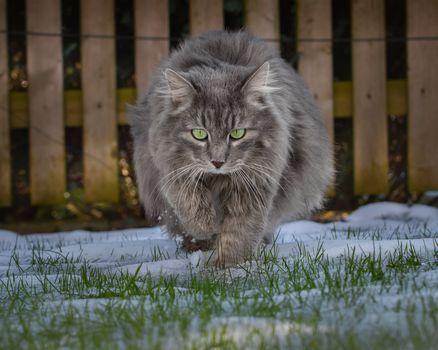 Бесплатные фото кот,кошка,животное,поза