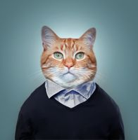 Бесплатные фото котофей,фото на паспорт,кот,кошка,фотошоп,портретное фото,art