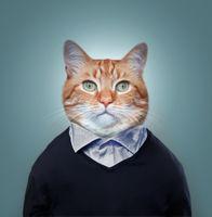 Фото бесплатно котофей, фото на паспорт, кот