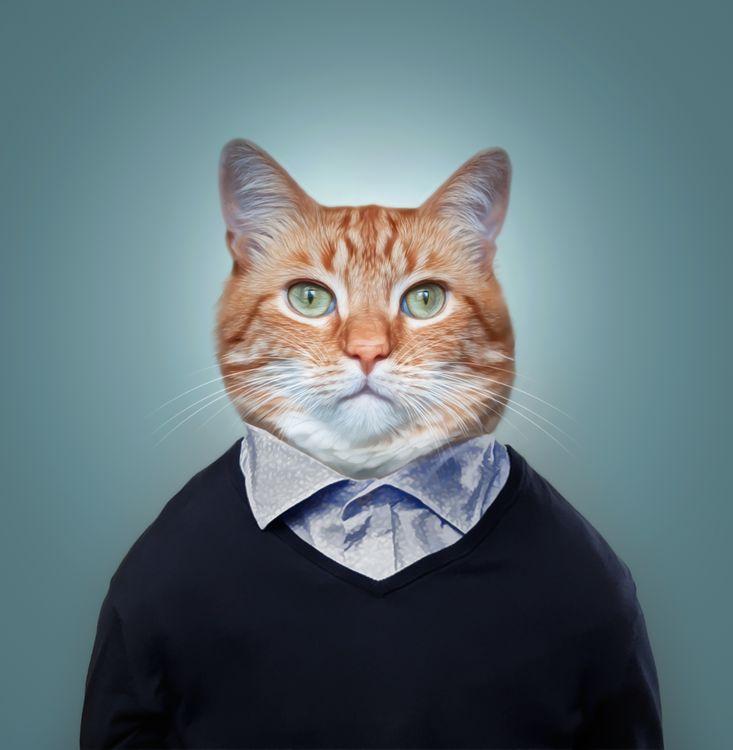 Фото бесплатно котофей, фото на паспорт, кот, кошка, фотошоп, портретное фото, art, фантазия, барсик муркин, рендеринг