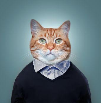 Бесплатные фото котофей,фото на паспорт,кот,кошка,фотошоп,портретное фото,art,фантазия,барсик муркин