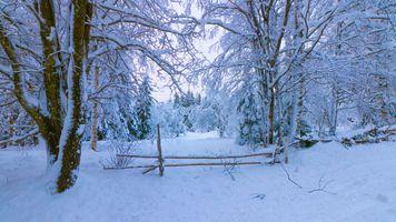 Бесплатные фото зима,лес,деревья,сугробы,снег,пейзаж