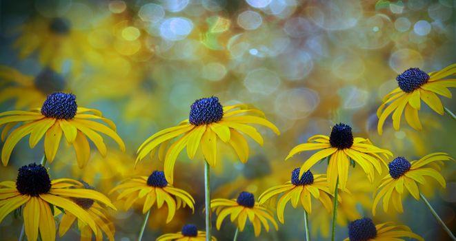 Заставки цветок, цветы, панорама