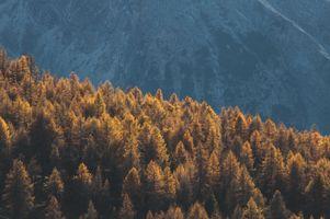Заставки Лес, Горы, Деревья
