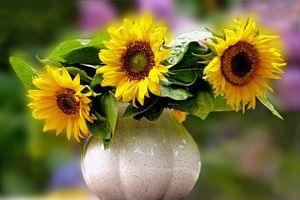 Бесплатные фото подсолнух,подсолнухи,цветы,флора,букет,ваза,натюрморт