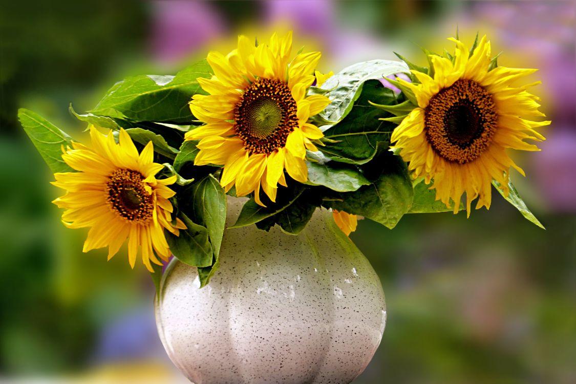Фото бесплатно подсолнух, подсолнухи, цветы, флора, букет, ваза, натюрморт, цветы