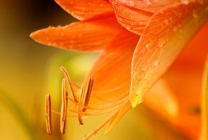 Фото бесплатно макро, растения, цветы