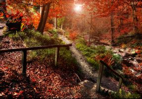Photo free Magical autumn in Solwaster, Belgium, Park