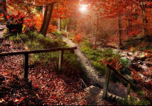 Заставки Волшебная игра осени в Солвастере,Бельгия,парк,осень,лес,деревья,тропинка,ступени,природа,краски осени,осенние краски,пейзаж