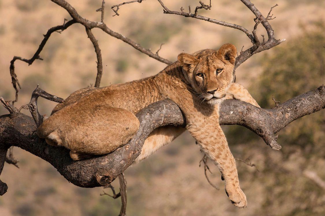 Обои вид, Африка, животное картинки на телефон