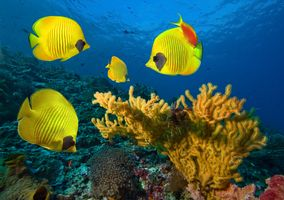 Фото бесплатно Рыбы, Рыбки, океан