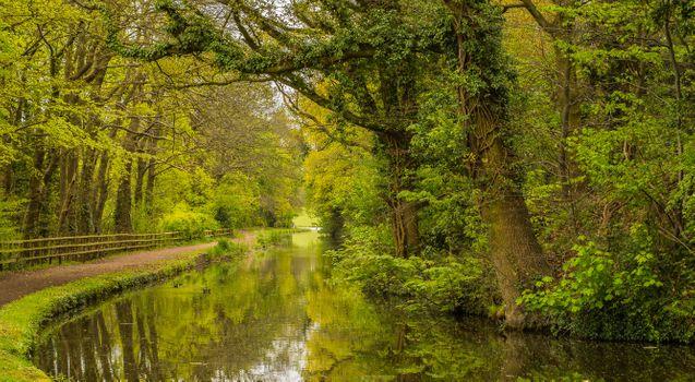 Бесплатные фото Канал Стурбридж и Бирмингем,Стортон - Сторбридж,Вустершир,Англия,лес,деревья,природа,пейзаж