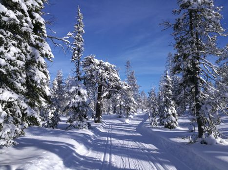 Фото бесплатно зимняя дорога, зима, лес
