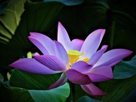 Фото бесплатно красивый цветок, красота, красивые цветы