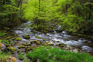 Заставки Smokey Mountain National Park, лес, речка
