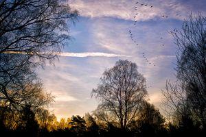 Фото бесплатно закат, осень, небо