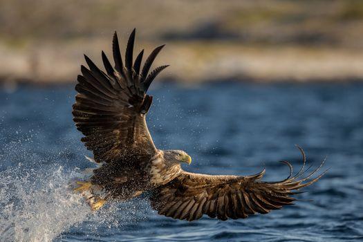 Фото бесплатно птица, капли, орел