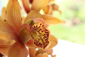 Фото бесплатно флора, крупным планом, цветущее растение